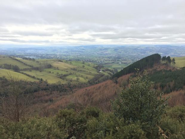 Coed Llangwyfan, North Wales.
